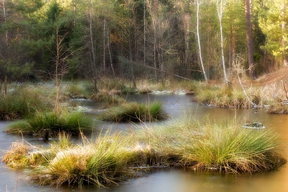 Forest, River, Pool, Mysterious Forest
