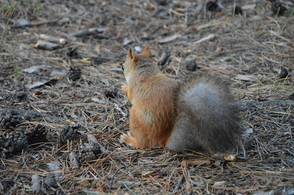 Squirrel, Protein Back, Forest, Sitting, Eats, Park