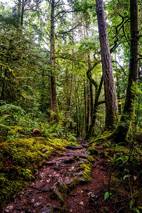 Forest, Away, Canada, Rainy, Nature, Tree, Path