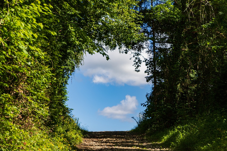 Passage, Ray Of Hope, Away, Nature, Forest, Output