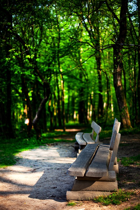 Nature, Park, Forest, Relaxation, Forest Path, Trail