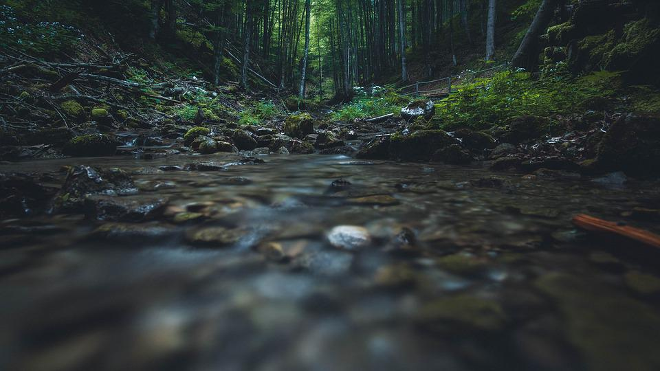 Water, River, Bach, Nature, Forest, Landscape, Rock