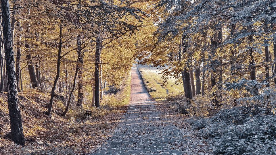 Fall, Road, Empty, Autumn, Landscape, Forest, Nature