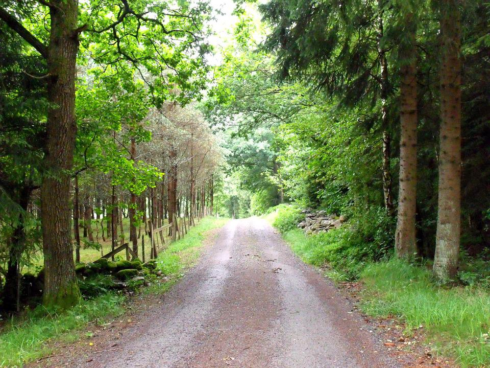 Forest Road, Hiking, Peace, Sense, Footpath, Park