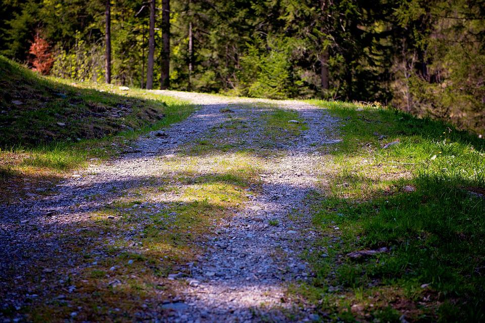 Away, Nature Trail, Forest Road, Forest