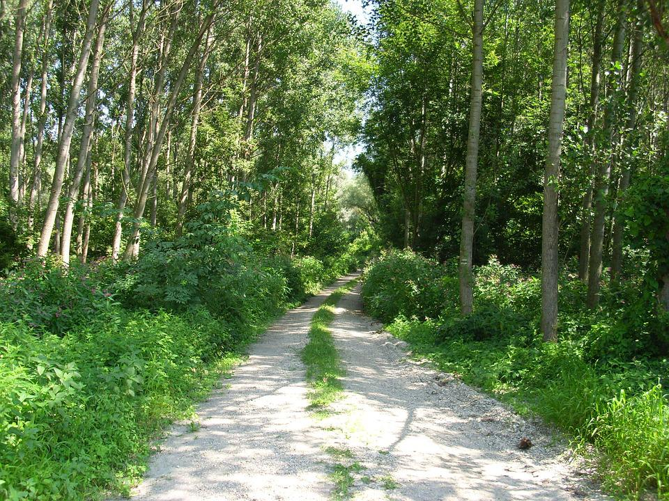 Forest Road, Dirt Road, Tour, Forest, Nature