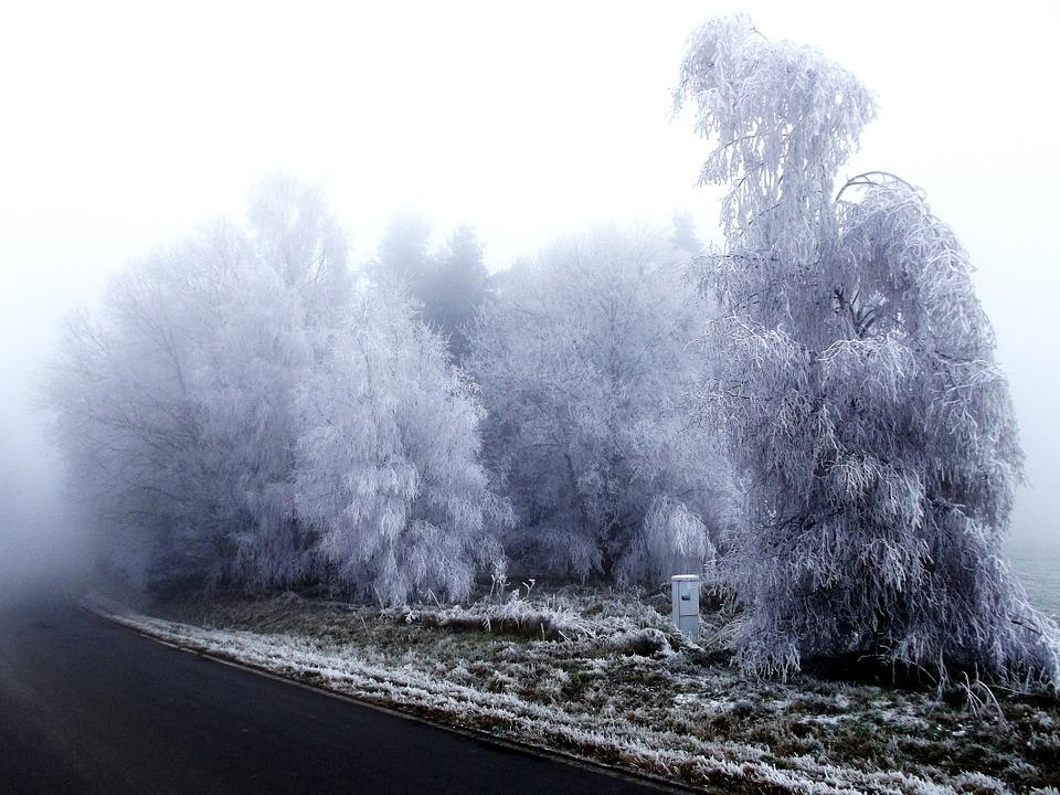 Frost, Rime, Winter, Forest, Road, Branches