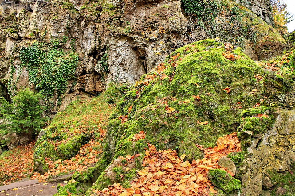 Forest, Rock, Moss, Hiking, Autumn, Emerge, Nature