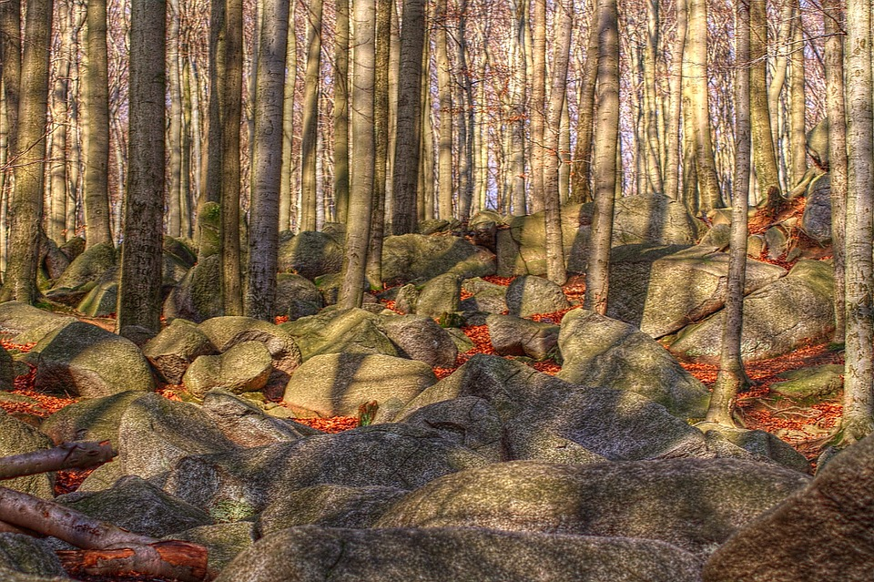 Nature, Forest, Trees, Rock, Light, Shadow