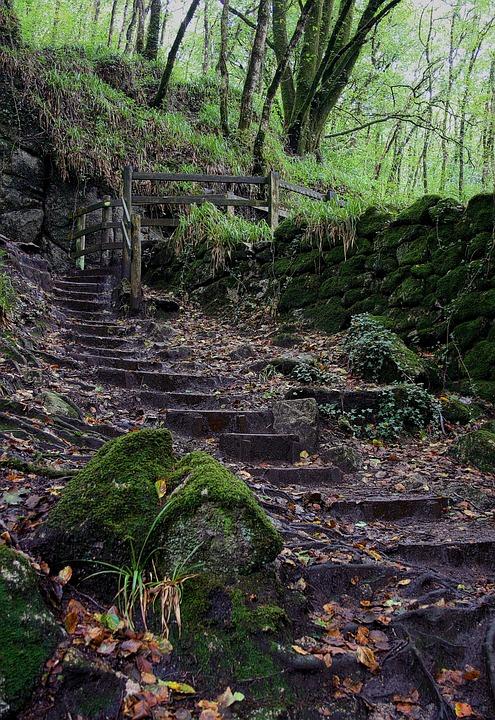Steps, Outdoors, Green, Forest, Rocks, Moss