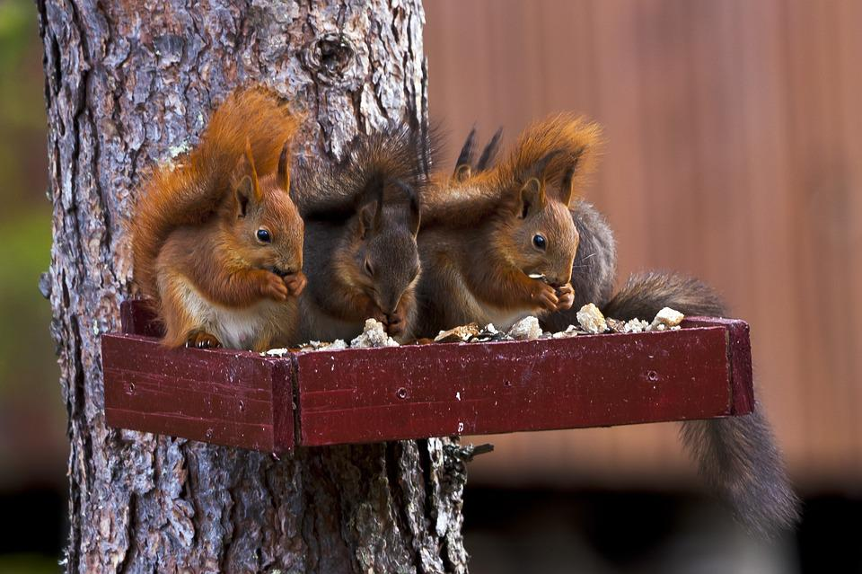 Squirrels, Rodents, Foraging, Eating, Wildlife, Forest