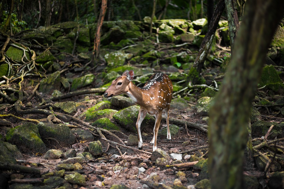 Roe Deer, Forest, Fawn, Nature, Wood, Animal World