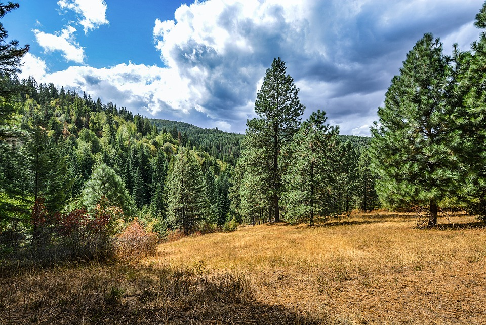 Forest, Meadow, Rustic, Country, Rural, Outdoor, Trees