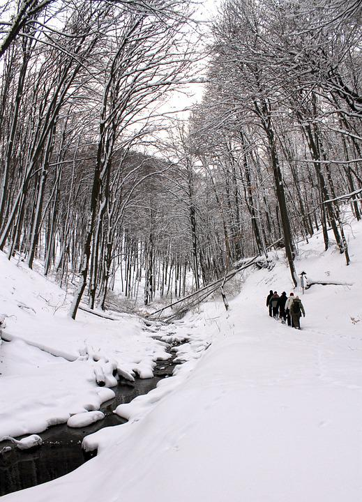 Winter, Forest, Snow, Hiker, Nature, Season, Cold