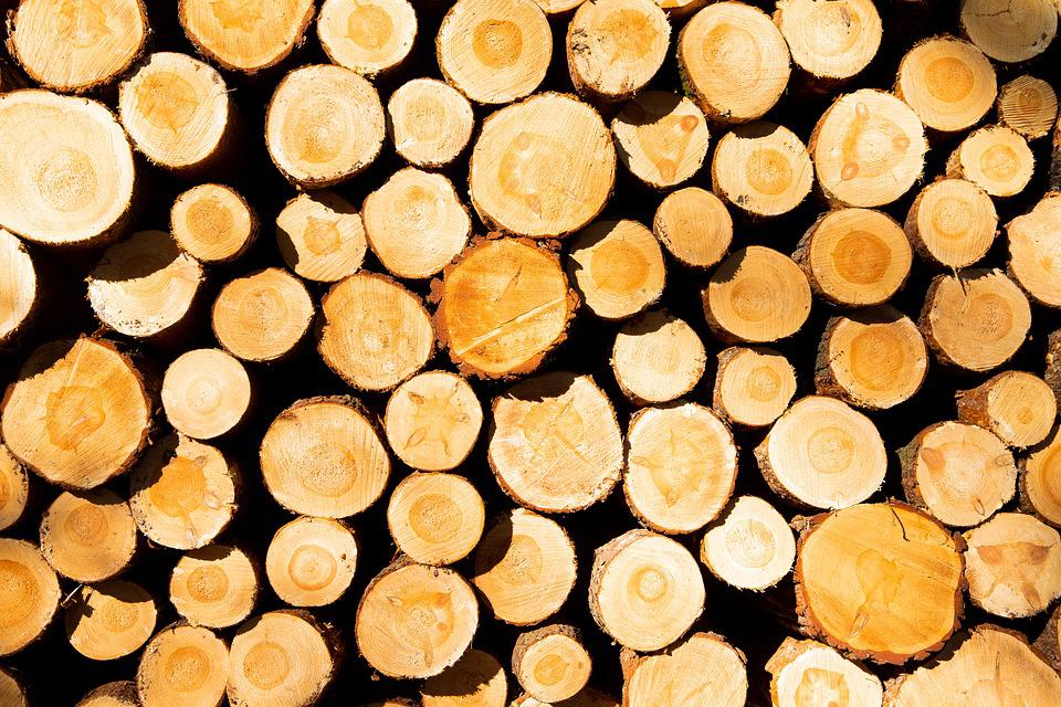 Wood, Stack, Background, Tree, Tribe, Section, Forest