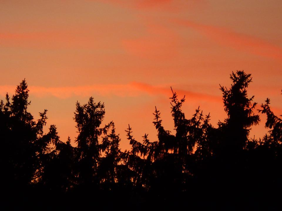 Firs, Afterglow, Forest, Silhouette