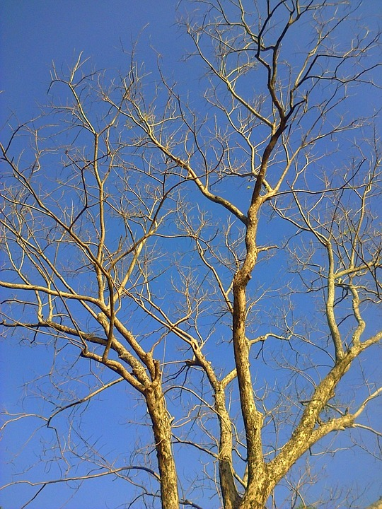 Tree, Branches, Branch, Nature, Forest, Woods, Sky