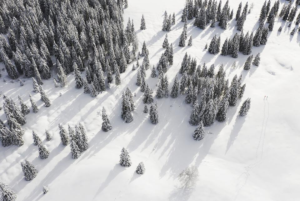 Mountains, Trees, Forest, Snow, Cold, Winter, Nature