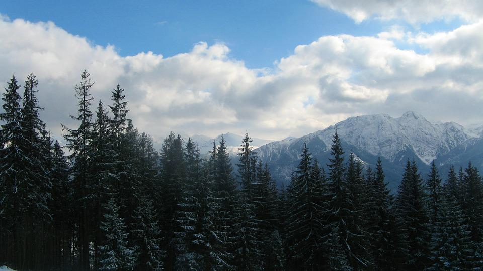 Snow, Mountain, Nature, Panoramic, Winter, Forest