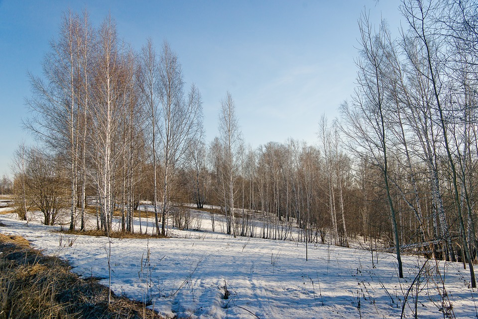 Snow, Nature, Spring, Siberia, Winter, Forest, Tree