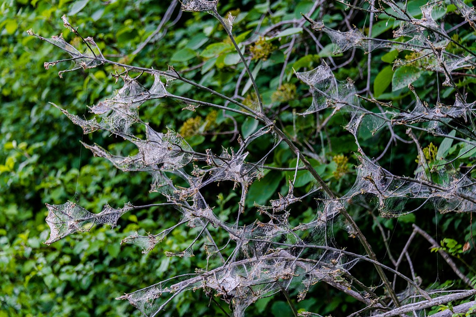 Tree, Aesthetic, Spider Webs, Nature, Forest, Leaves