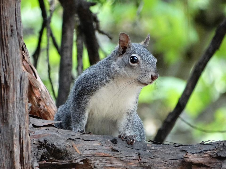 Squirrel, Forest, National Park, Usa