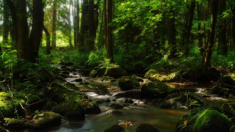 Forest, Running Water, Stones, Water, Stony, Stone