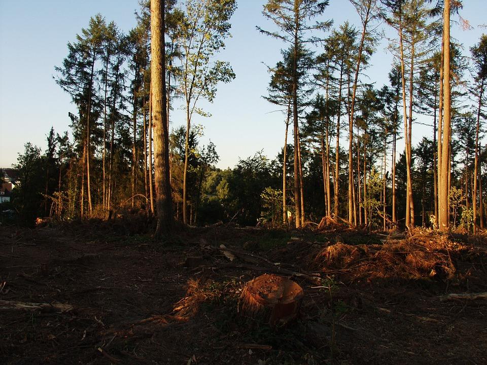 Forest, Storm Damage, Waste Wood, Destruction