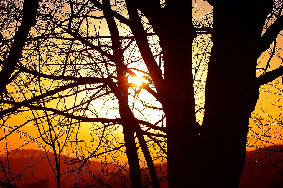 Nature, Sun, Trees, Branches, Aesthetic, Forest