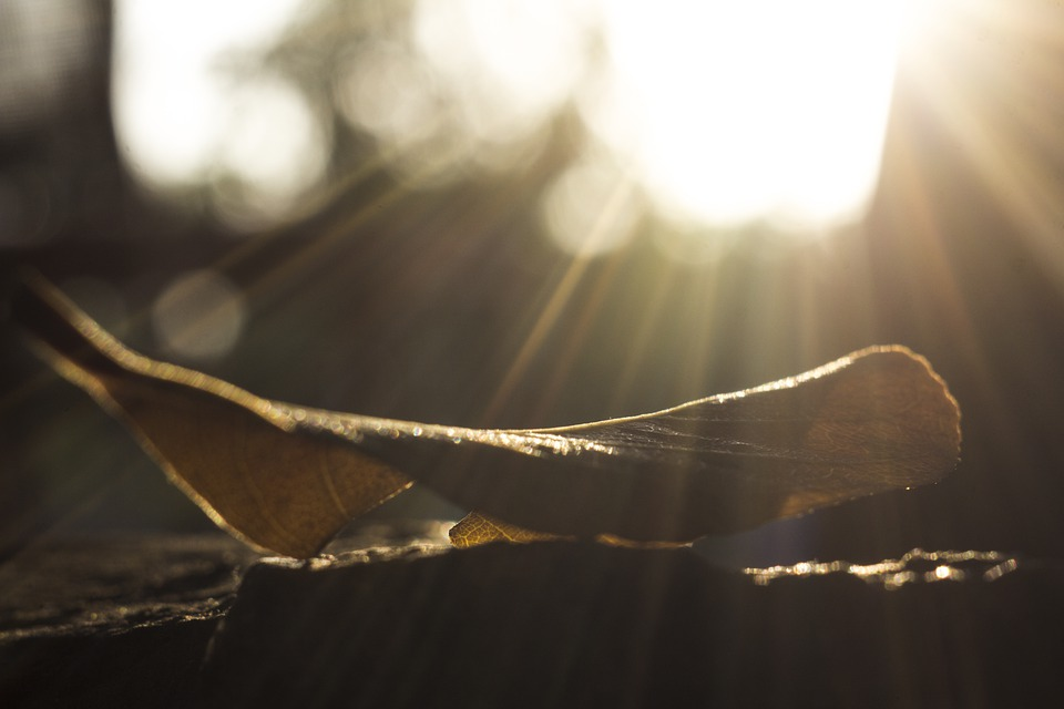 Ray, Leaf, Leaves, Nature, Forest, Tree, Sun, Autumn