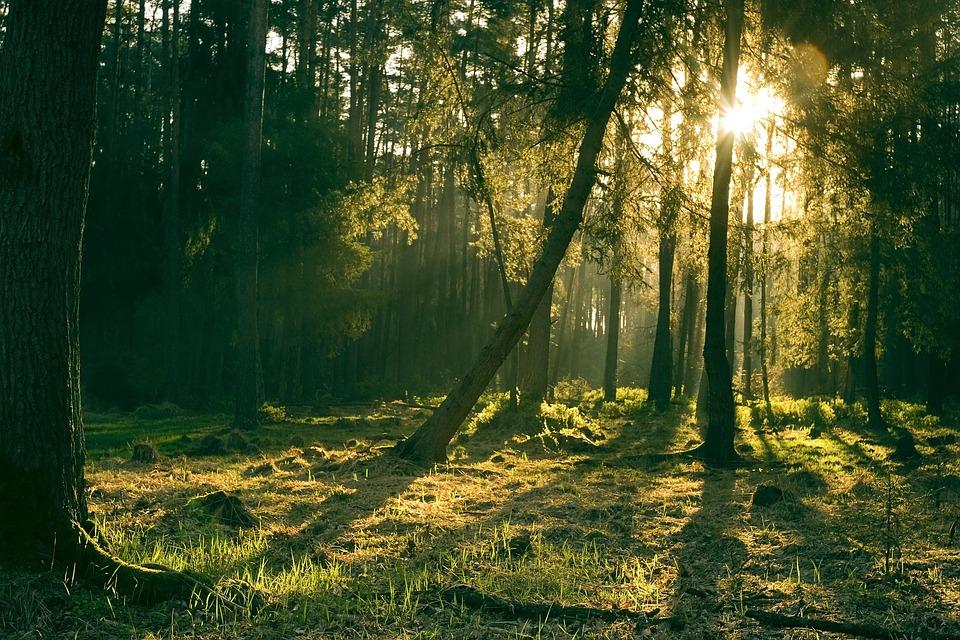 Sun, Landscape, Nature, Light, Forest, Trees, Grass