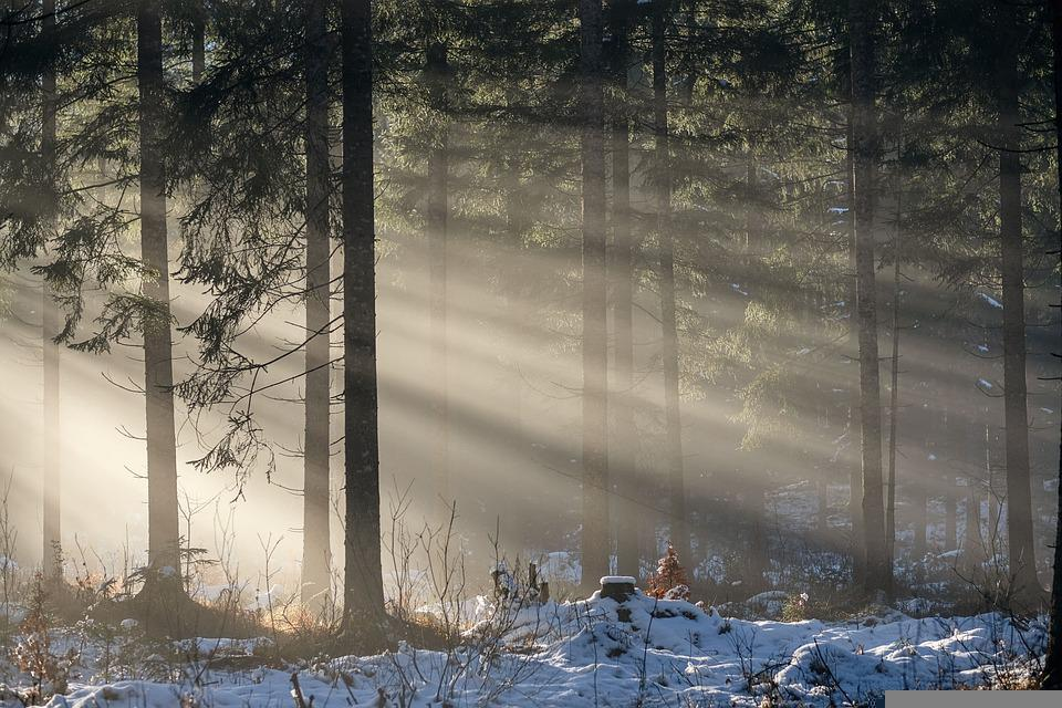 Forest, Trees, Sunbeams, Snow, Ice, Wintry, Winter