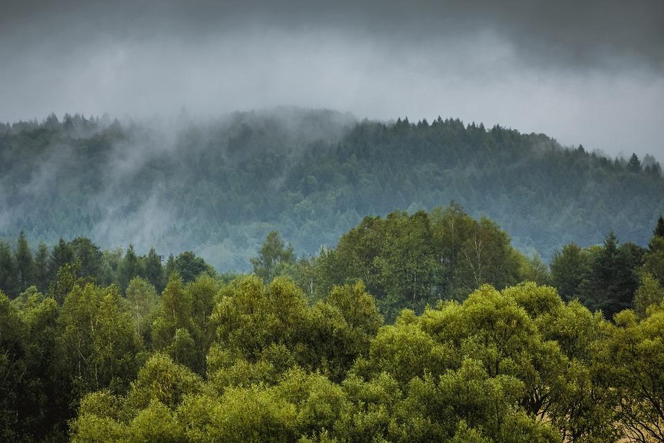 The Fog, Para, Rain, Forest, Tree, Foliage, Leaf