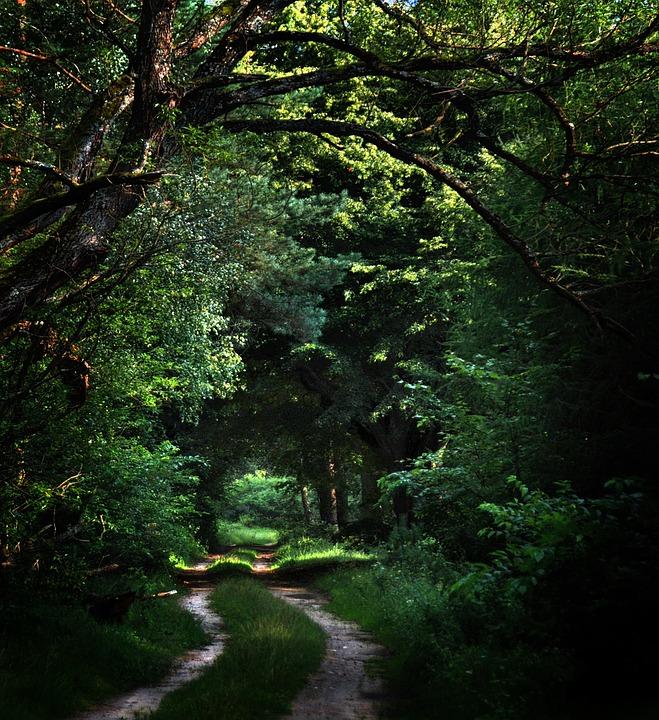 Forest, Way, Trail, Dark, Tree, Landscape, Green