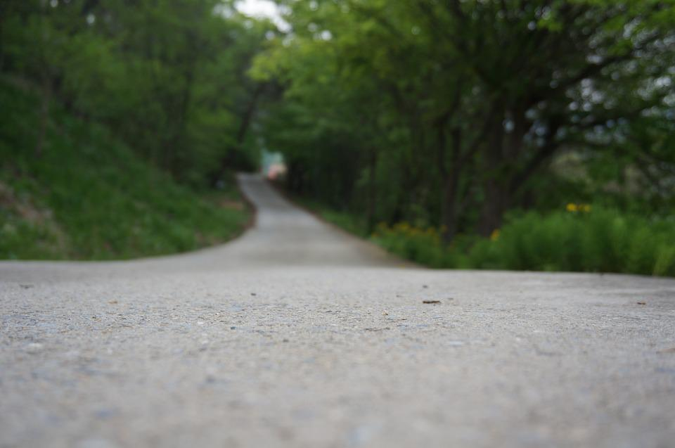 Trail, Street, Republic Of Korea, Road, Nature, Forest