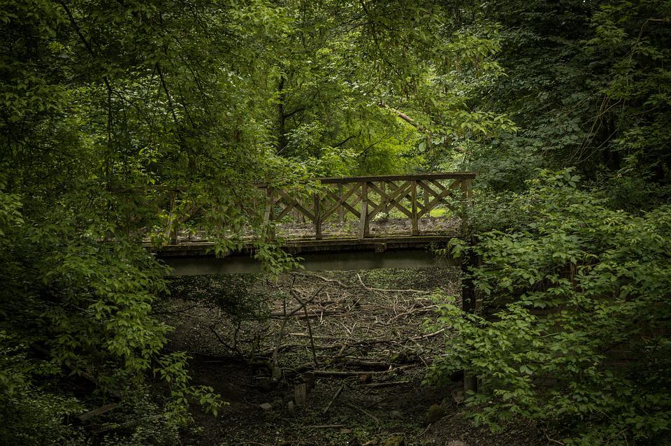 Bridge, Railway, Forest, Landscape, Construction, Train