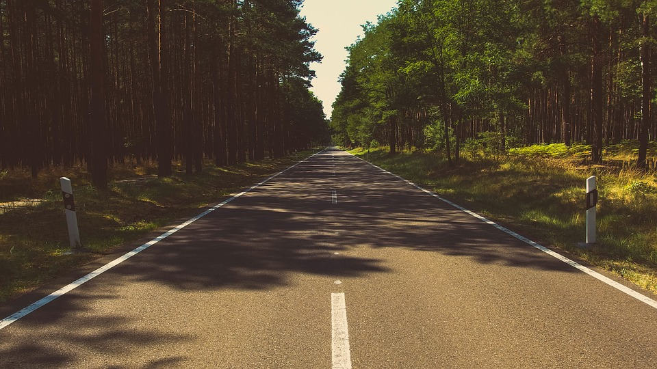 Forest, Nature, Road, Travel, Trees