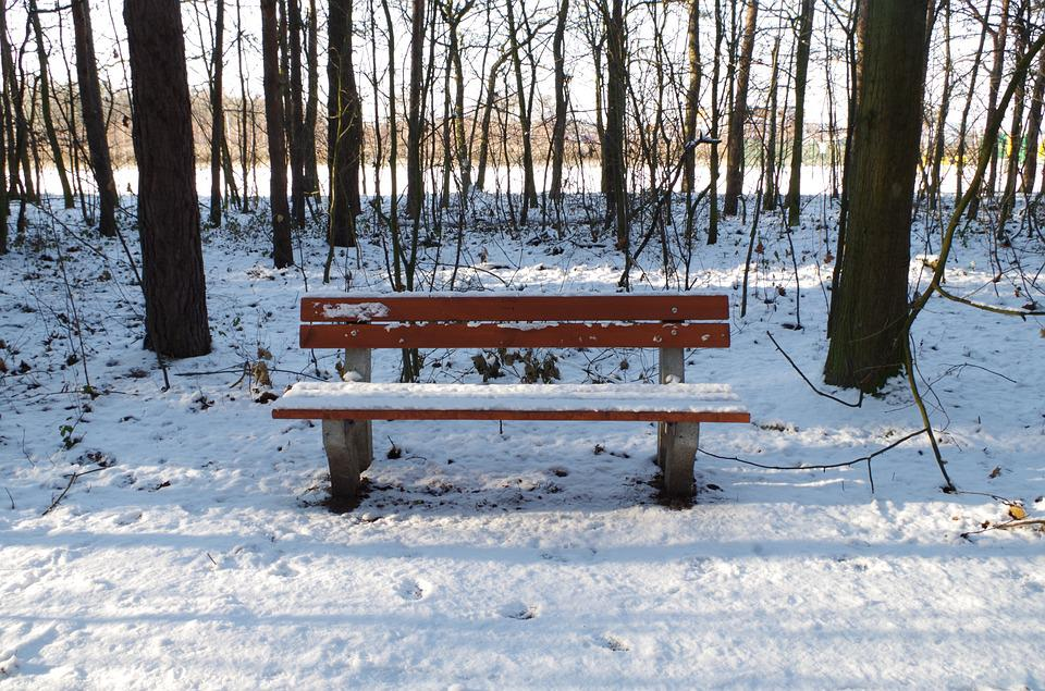 Bench, Forest, Winter, Tree