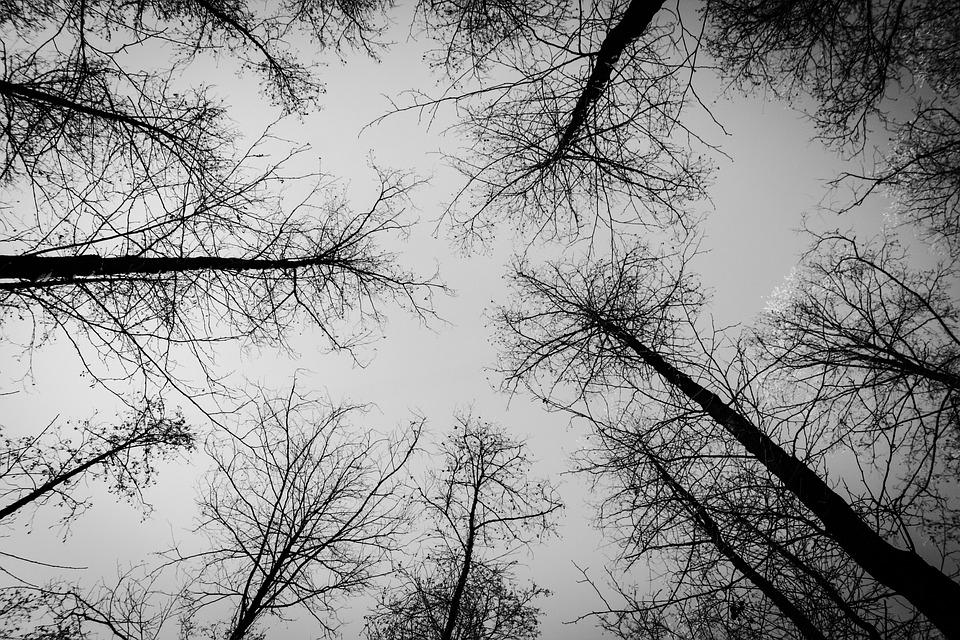 Forest, Tree, Winter, Snow, Nature, Sky, Dark
