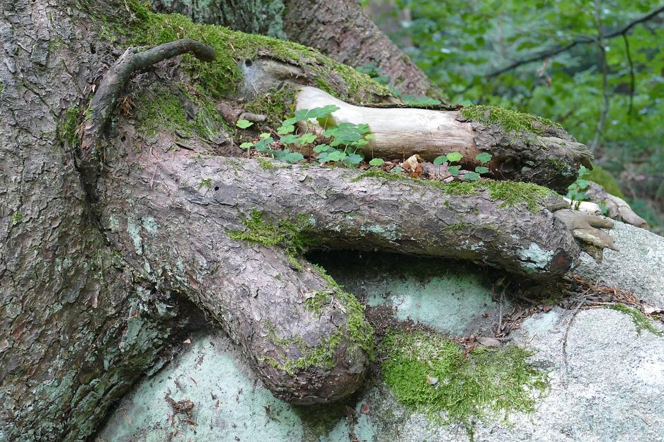 Tree, Forest, Strange, Perspective, Landscape