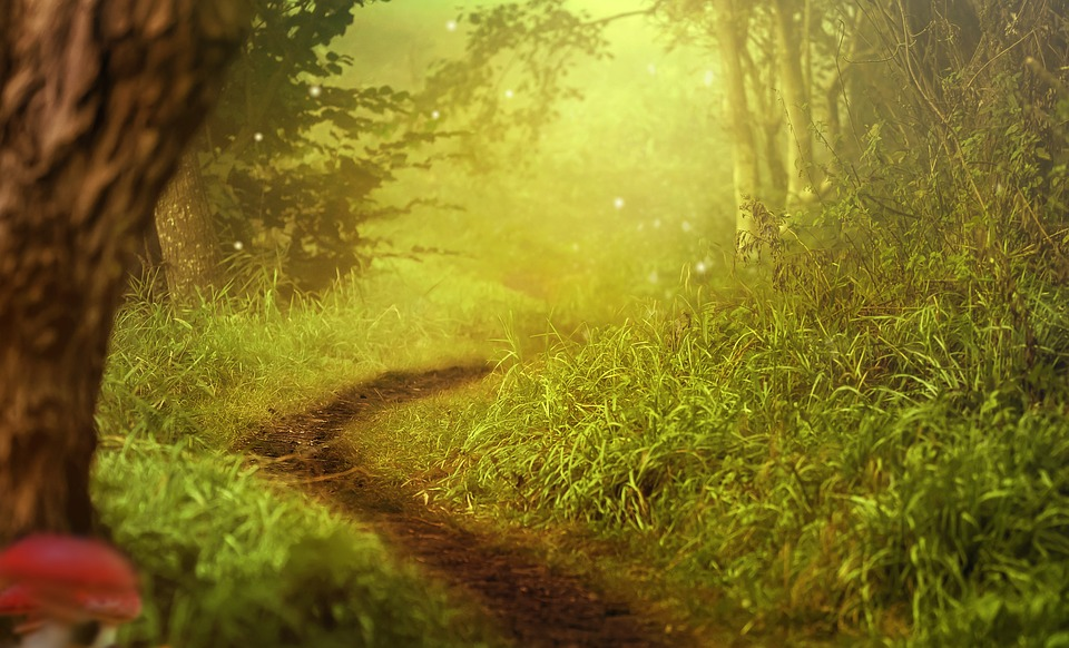 Background Image, Forest, Trees, Path, Forest Path