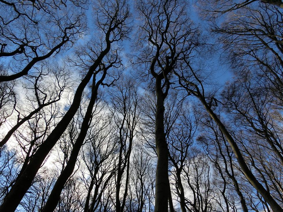 Forest, Sky, Winter, Landscape, Rügen, Trees