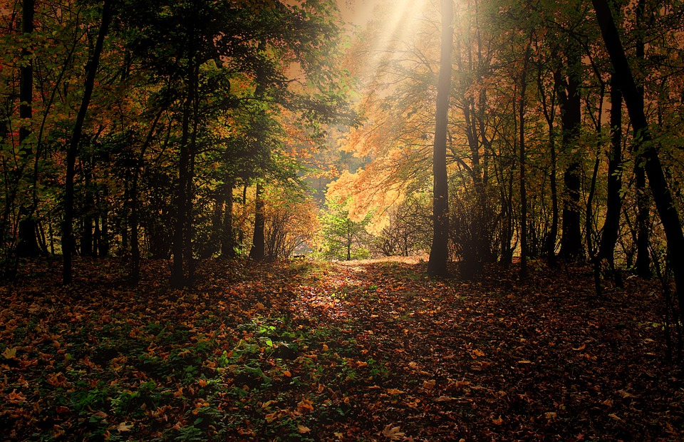 Forest, Trees, Sunbeam, Mood, Orange, Nature, Rest