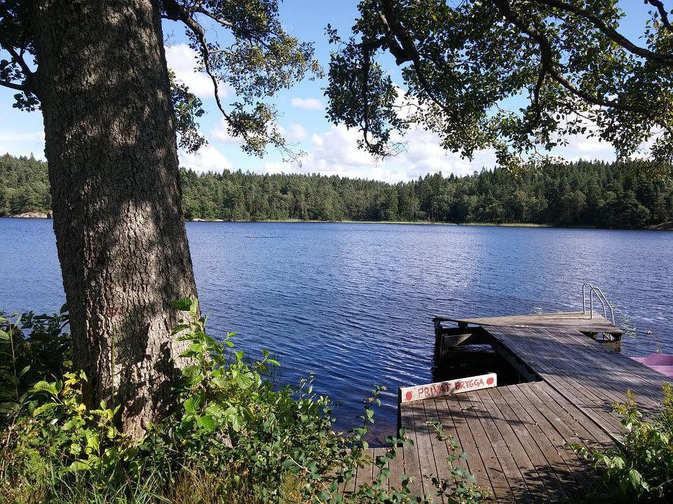 Lake, Sweden, Jetty, Forest, Trees, Tree, Park