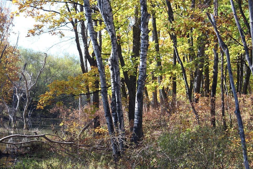 Forest, Autumn, Season, Landscape, Nature, Trees