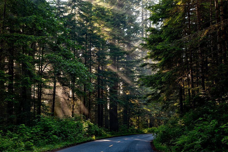 Forest, Trees, Woods, Sunlight, Shaft Of Light