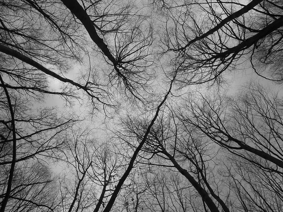 Forest, Branches, Nature, Trees, Tree Branches