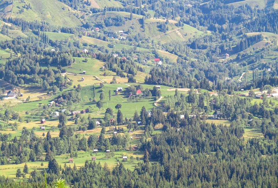 Trees, Forest, Woods, Valley, Mountains, Alpine