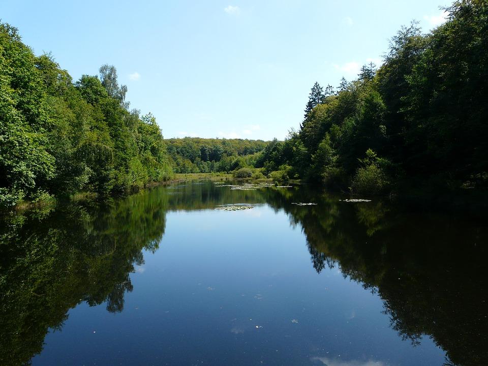 Pond, Water, Forest, Trees, Vosges, Landscape, Nature