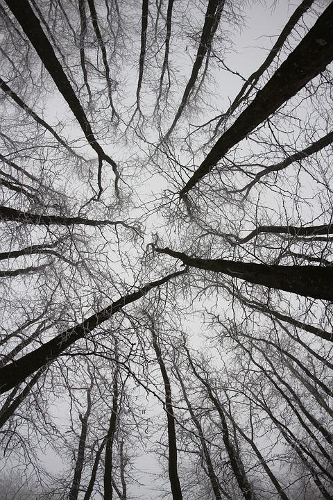 Forest, Trees, Twigs, Tall
